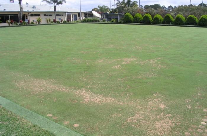 Turf Renovation and Soil Biology