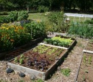 Applied Soil Biology in the Home Garden
