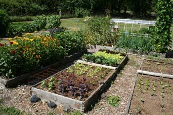 Applied Soil Biology in the Home Garden