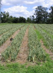Organic Farm Services