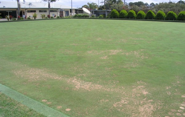 Turf Renovation and Soil Biology